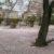 高虎さんのお墓に桜のじゅうたん